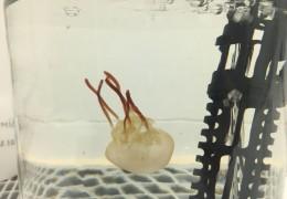medusa-taller-CSIC