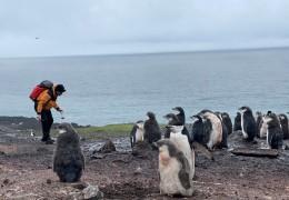 Investigadores trabajando en la Antártida con pingüinos del género Pygoscelis  / Foto: A. Tovar